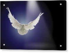Dove Flying Through Beam Of Light Acrylic Print by Comstock Images