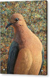 Dove Acrylic Print by James W Johnson