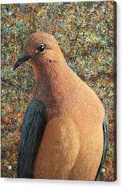 Dove Acrylic Print by James W Johnson