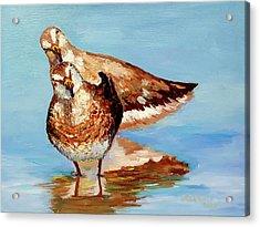Dowitcher Birds Acrylic Print