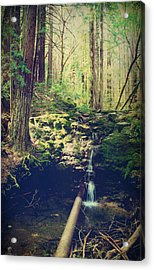 Down At The Old Dam Acrylic Print by Laurie Search