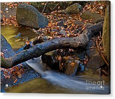 Down By The River Acrylic Print by Robert Pilkington