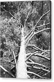 Down Tree Acrylic Print by Derek Clark