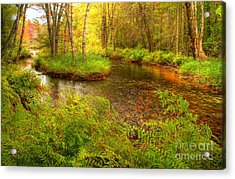Acrylic Print featuring the photograph Downeast Fall Stream by Alana Ranney
