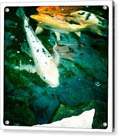 Downstream 2 Acrylic Print