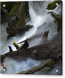 Downstream Acrylic Print by Matthew Fredricey