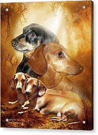 Doxies - Dappled In Sunshine Acrylic Print