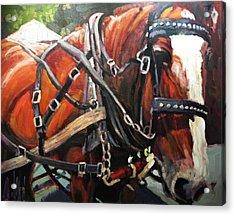 Draft Horse Acrylic Print by Brian Simons