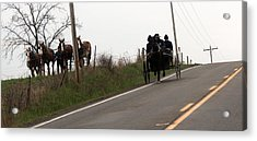 Draft Horses And Amish Acrylic Print by R A W M