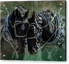 Acrylic Print featuring the photograph Draft Horses by Mary Hone