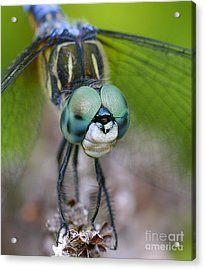 Acrylic Print featuring the photograph Bug-eyed by Debbie Stahre