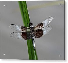 Acrylic Print featuring the photograph Dragon Fly by Jerry Battle