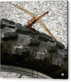 Dragon Fly Perched On Bicycle Tire Acrylic Print