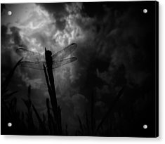 Dragon Noir Acrylic Print by Tim Good