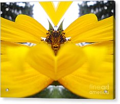 Dragon Sunflower Acrylic Print