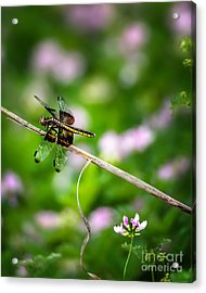 Dragonfly Waiting For A Mate Acrylic Print by Tamyra Ayles