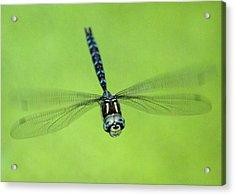 Dragonfly #1 Acrylic Print by Ben Upham III