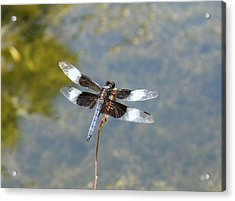 Dragonfly 1 Acrylic Print by Bruce Miller