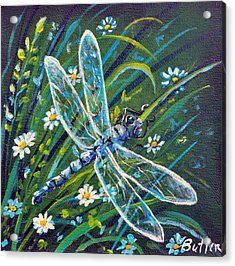 Dragonfly And Daisies Acrylic Print