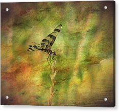 Dragonfly Art Acrylic Print