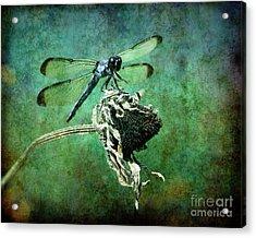 Dragonfly Art Acrylic Print by Sari Sauls