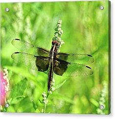 Dragonfly Beauty Acrylic Print