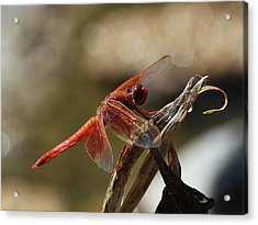 Dragonfly Closeup 1 Acrylic Print by Richard Stephen