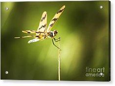 Dragonfly Clutching Fern Blade Acrylic Print by Jorgo Photography - Wall Art Gallery