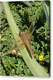 Dragonfly Acrylic Print by E M Murray