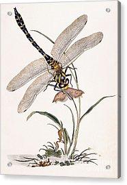 Dragonfly Acrylic Print by Edward Donovan