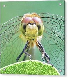 Dragonfly Face Acrylic Print by Jim Hughes