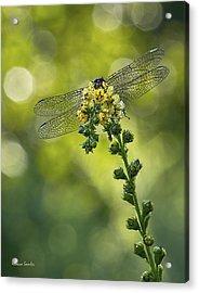 Dragonfly Flower Acrylic Print