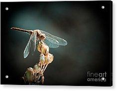 Dragonfly Acrylic Print by Gabriela Insuratelu