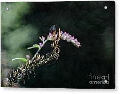 Dragonfly II Acrylic Print