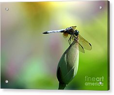 Dragonfly In Wonderland Acrylic Print by Sabrina L Ryan