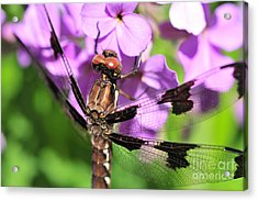 Dragonfly Acrylic Print by Joe  Ng