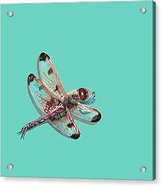 Dragonfly Acrylic Print by Jude Labuszewski