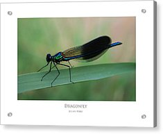 Acrylic Print featuring the digital art Dragonfly by Julian Perry