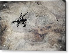 Dragonfly On Solid Ground Acrylic Print