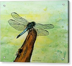 Dragonfly Acrylic Print by Mamie Greenfield