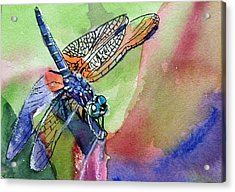 Dragonfly Of Many Colors Acrylic Print