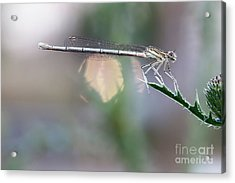 Acrylic Print featuring the photograph Dragonfly On Leaf by Michal Boubin