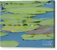 Dragonfly On Lily Pad Acrylic Print