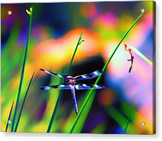 Dragonfly On Pastels Acrylic Print by Bill Tiepelman