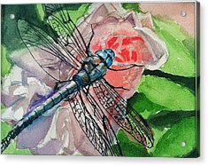 Dragonfly On Rose Acrylic Print