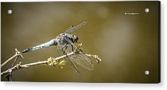 Acrylic Print featuring the photograph Dragonfly On The Spot by Stwayne Keubrick