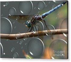 Acrylic Print featuring the photograph Dragonfly Opera by Roxy Riou