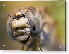 Dragonfly Portrait Acrylic Print by Andre Goncalves