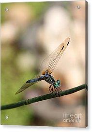 Dragonfly Ref.13 Acrylic Print by Robert Sander
