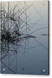Dragonfly Reflections Acrylic Print